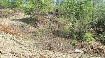 Defrişările din zona Rucăr s-au mutat la Bughea de Sus 5
