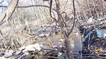 Un grup de locuitori din Bradu cere Primăriei curăţirea pârâului Dâmbovnic 2