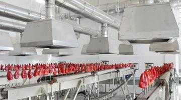 O familie de libanezi a transformat radical Fabrica de Legume şi Fructe de la Topoloveni 6
