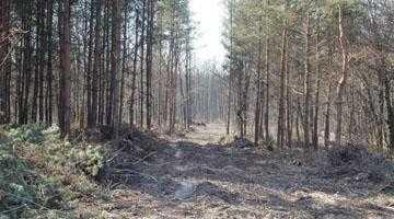"""Peste 30 ha de pădure au """"decolat"""" de la Răteşti şi au """"aterizat"""" în Trivale 5"""