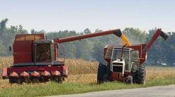 Argeșul ocupă ultimul loc la recoltarea grâului 5