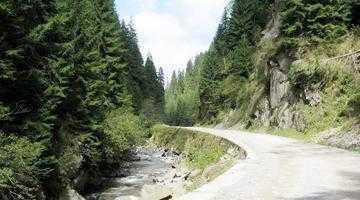 Valea Vâlsanului, singurul loc din lume unde supravieţuieşte aspretele 2