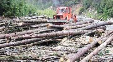 Ultimul raport Greenpeace: Argeşul, campion la numărul tăierilor forestiere ilegale 5