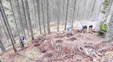 Neamţul care salvează pădurile României 4