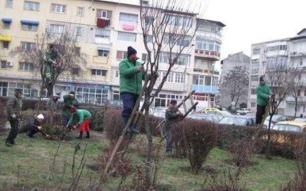 Primăria Piteşti susţine că există sute de solicitări din partea cetăţenilor pentru tăierea arborilor uscaţi din cartiere 6