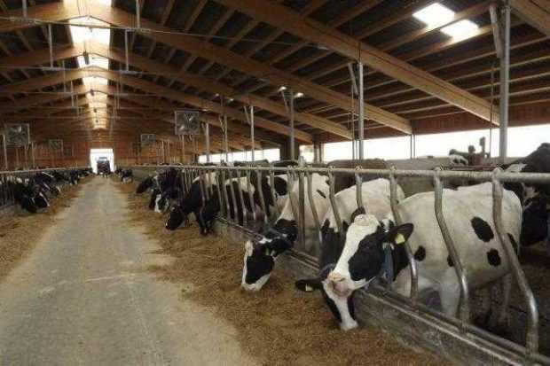 Verificări la fermele care au aprovizionat cu lapte fabrica Lactate Brădet 6