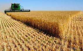 Evaziune fiscală într-o afacere cu cereale 5