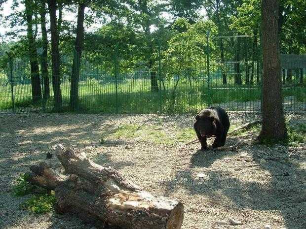 Timp de trei zile, intrare gratuită la Grădina Zoologică Pitești 6