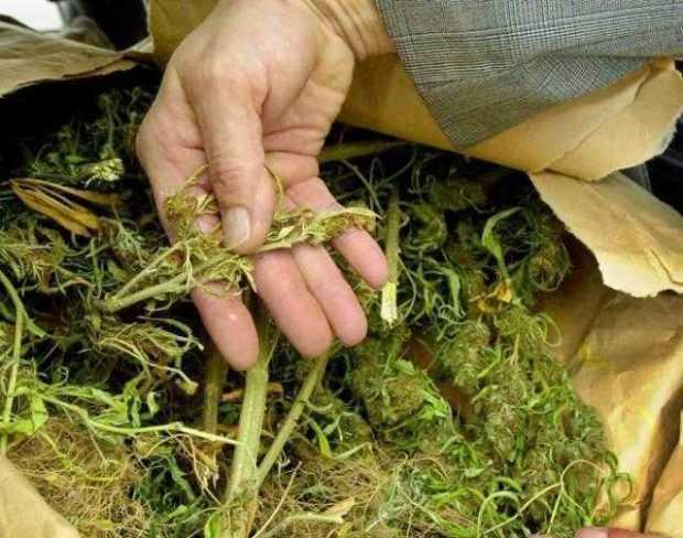 Cultiva canabis în comuna Merișani 5
