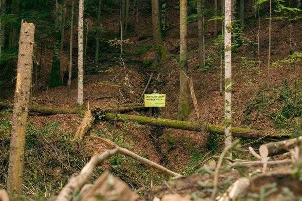 Greenpeace România a sesizat autoritățile despre tăierile ilegale care încă au loc în pădurile virgine din Argeș 2