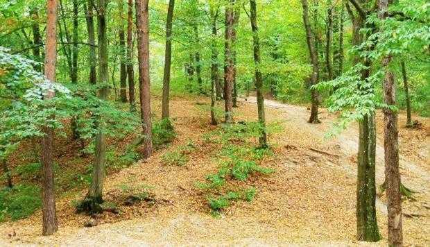 O parte din terenul Pădurii Trivale propus să devină rezervaţie naturală ar putea face obiectul unor retrocedări 4