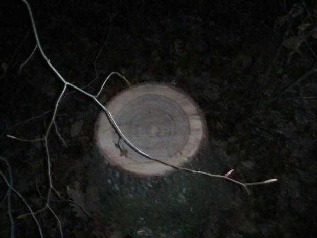 furt lemne titesti