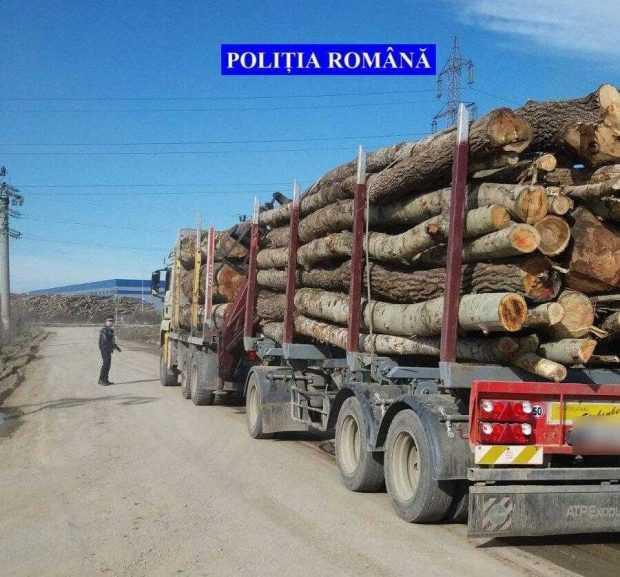 hoti lemn