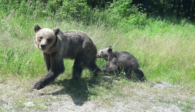 """""""În ultima perioadă, urşii mănâncă şi câinii. Se întâmplă aproape zilnic..."""" 6"""