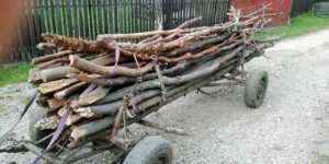 Hoţi de lemne, prinși în flagrant de jandarmii argeșeni 7