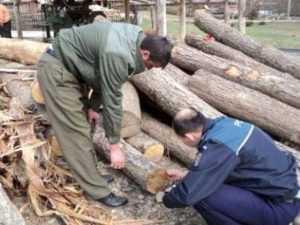 Activităţi de combatere a delictelor silvice în Argeș 5
