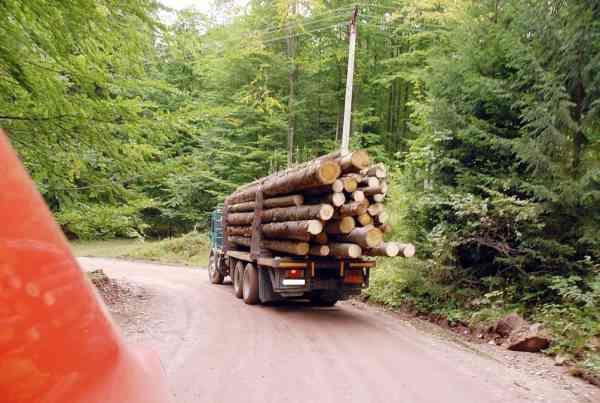 Transporta lemne în Albeștii de Argeș cu un autocamion neînmatriculat 5