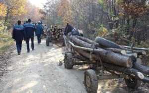 Hoți de lemne amendați de polițiștii argeșeni 3