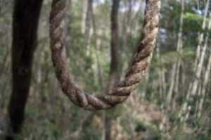 S-a spânzurat în pădure 6