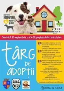 Câini maidanezi îngrijiți, dați spre adopție 4