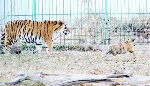 Program special la Zoo în minivacanţa de Paşti 5