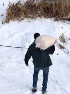 FOTO/ VIDEO Lebedele de pe Râul Argeș, hrănite de AULIM 7
