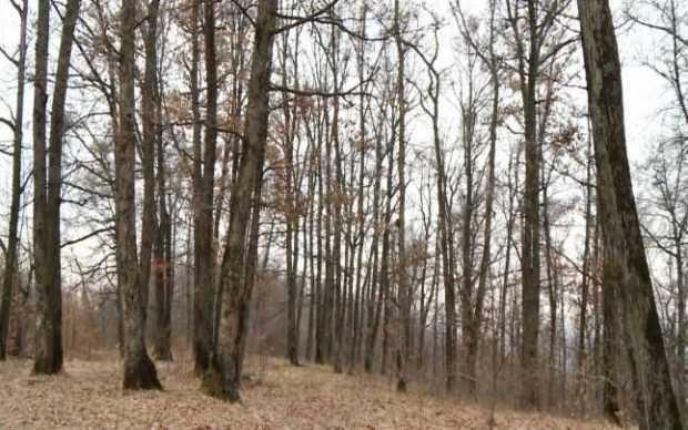 Jurist găsit spânzurat în Pădurea Trivale 5