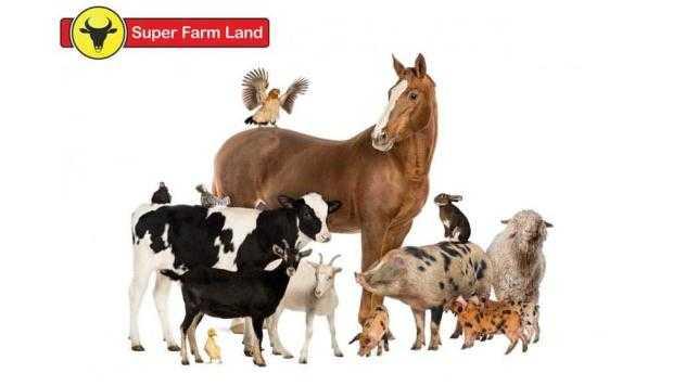 Adăpători pentru animale și păsări de la Super Farm Land - caracteristici și avantaje 5