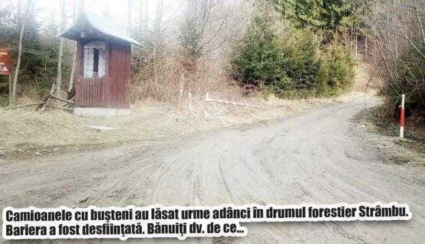 Să râdem cu comicii de la Direcţia Silvică. Luna plantării arborilor, marcată de Chiriloiu printr-o... replantare 6