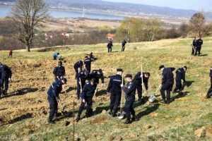 Luna plantării arborilor. 5000 de puieți plantați în Budeasa. 6