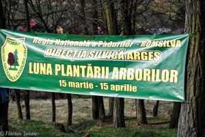 Luna plantării arborilor. 5000 de puieți plantați în Budeasa. 7