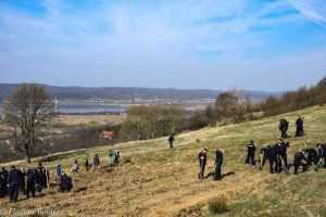 Luna plantării arborilor. 5000 de puieți plantați în Budeasa. 10