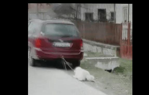 VIDEO Ce spune Protecția Animalelor despre câinele târât pe șosea de mașina vicelui de la Vlădești 5