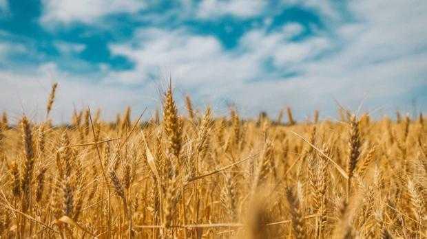 presshub.ro: Primul parc agroindustrial din Moldova, salvat de la eșec, devine pol agricol al regiunii. TransAgropolis, în plin proces de extindere – PressHub 5