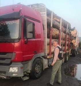Transport ilegal de lemne, descoperit în comuna Corbi