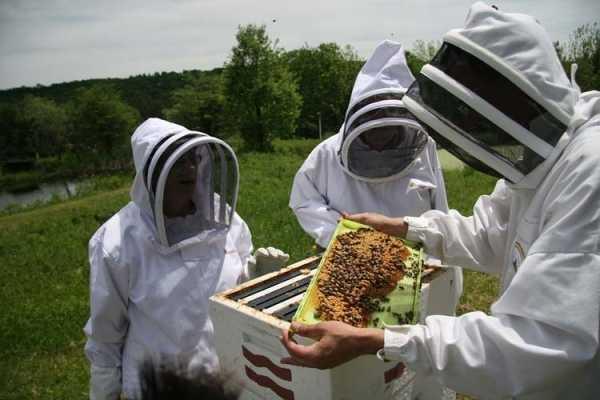 Guvernul a aprobat un sprijin financiar de 150,6 milioane de lei pentru apicultori 2