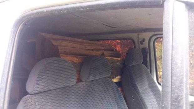 Nucșoara: Tânăr amendat pentru furt de lemne 4