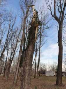 Arborii uscați din Parcul Lunca Argeșului vor fi eliminați 6