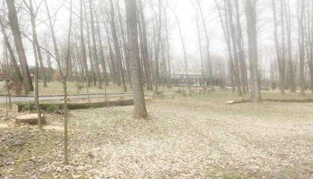 Din Parcul Lunca Argeşului au dispărut 50 de arbori şi au mai rămas de tăiat încă 30 4