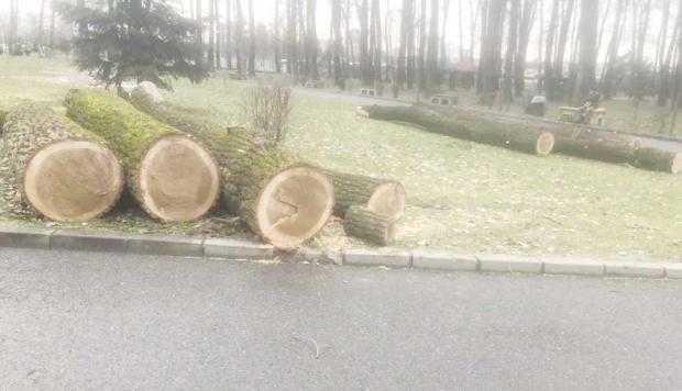 Din Parcul Lunca Argeşului au dispărut 50 de arbori şi au mai rămas de tăiat încă 30 5