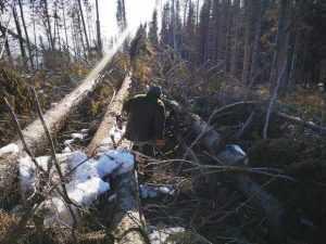 Ursuleț nou născut, salvat de muncitorii forestieri și de pădurarii Ocolului Silvic Păpușa Rucăr 5