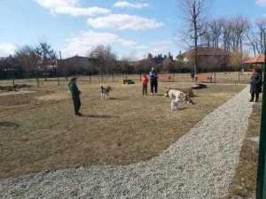 Nou, în Lunca Argeșului: Parc pentru câinii cu stăpân 6