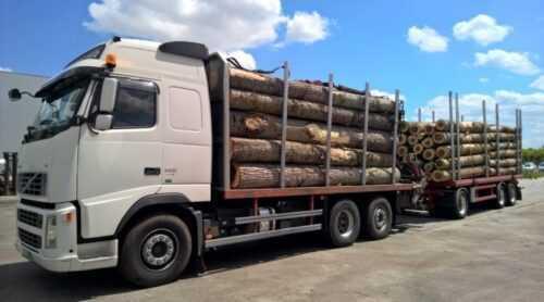 Transport ilegal de lemne efectuat de doi argeșeni. Au fost amendați conform legii 5
