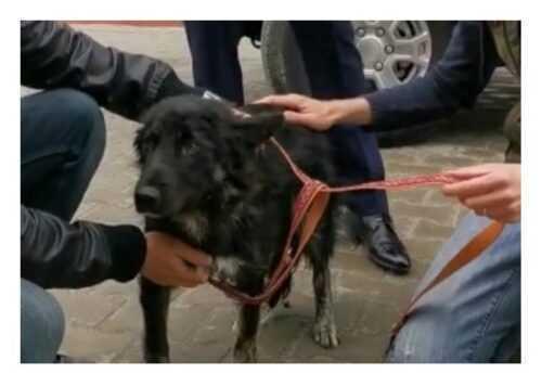 Câine tăiat cu un cuțit de mai mulți copii, salvat de polițiștii argeșeni 5